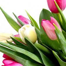 http://blogg.vk.se/lillabloggen/2009/05/28/mamma-har-blivit-galen-vad-ar-hon-i-for-kris-95421